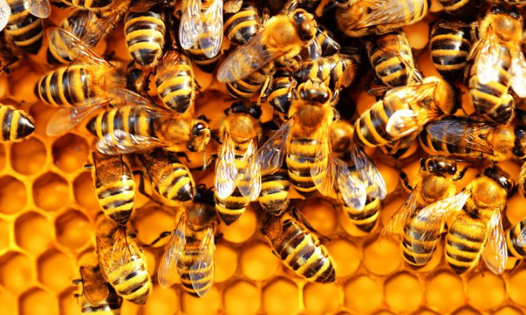 Анализа пчеларске 2020. године у Србији