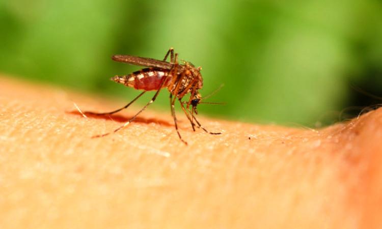 Третман сузбијања ларви комараца